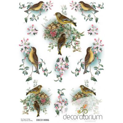Decoratorium A4 - DECO0086