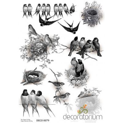 Decoratorium A4 - DECO0079